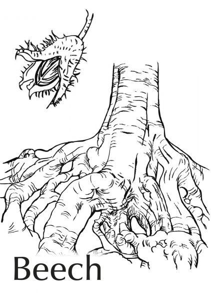 Beech Tree and nut