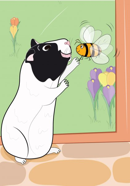 Bertie The Guinea Pig App