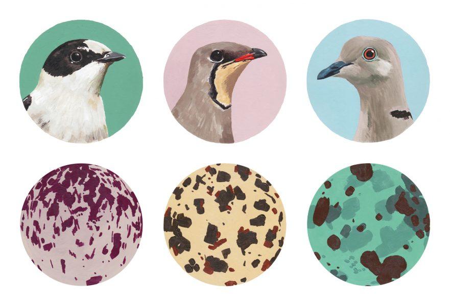 Bird Snaps