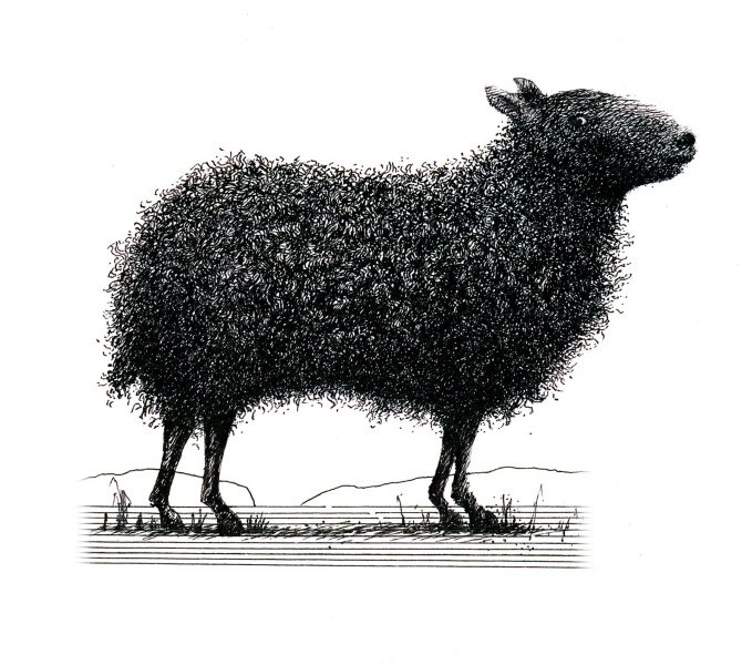 Black Sheep Wine Label Image