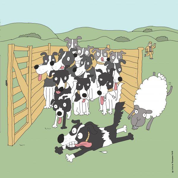 Dog sheep trials