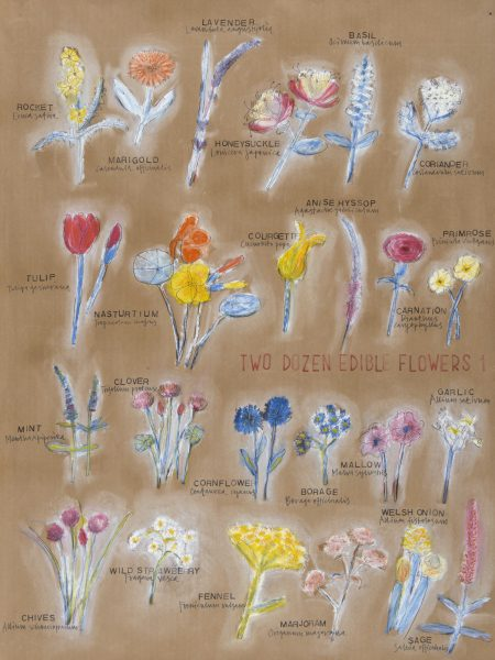 Edible flowers 1