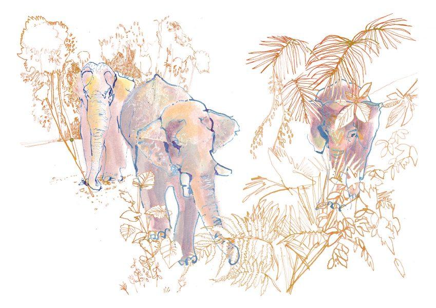 Elephants of Chiang Mai