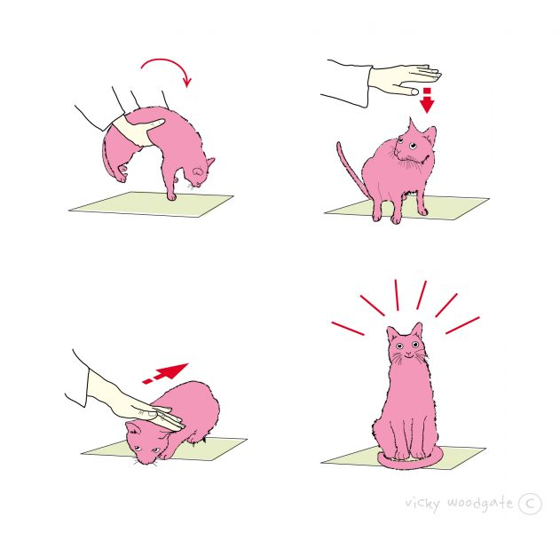 How to smooth a cat