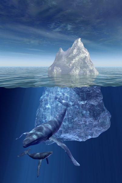 Iceberg Whale Underwater