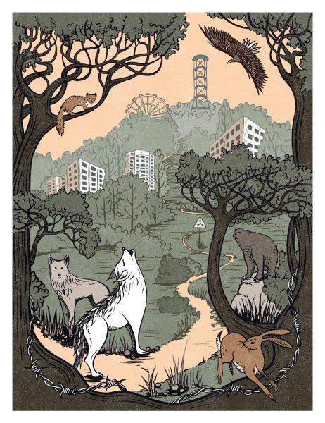 Illustrations for BBC Wildlife Magazine