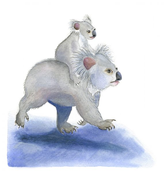Koala Carry-On