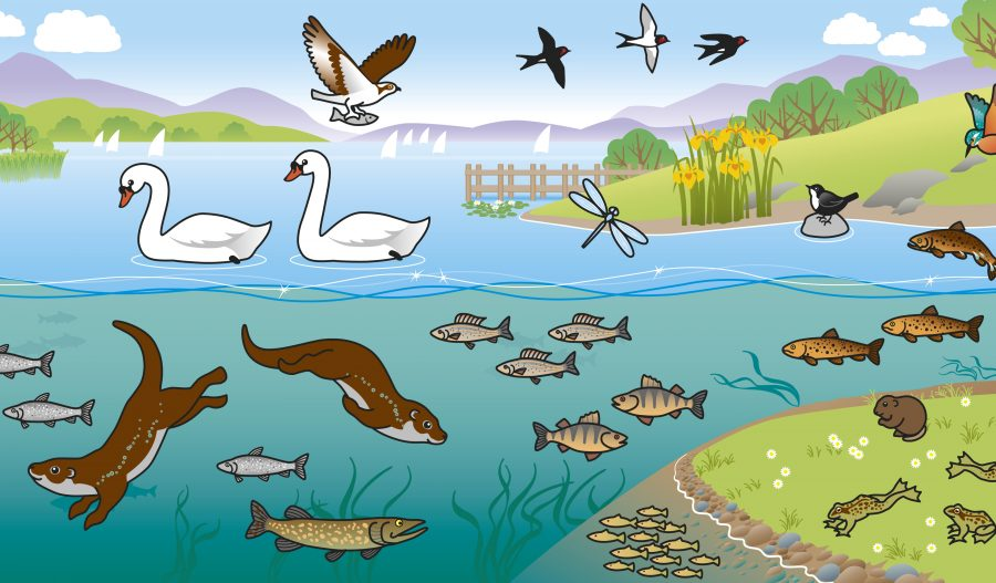 Lake sticker book illustration