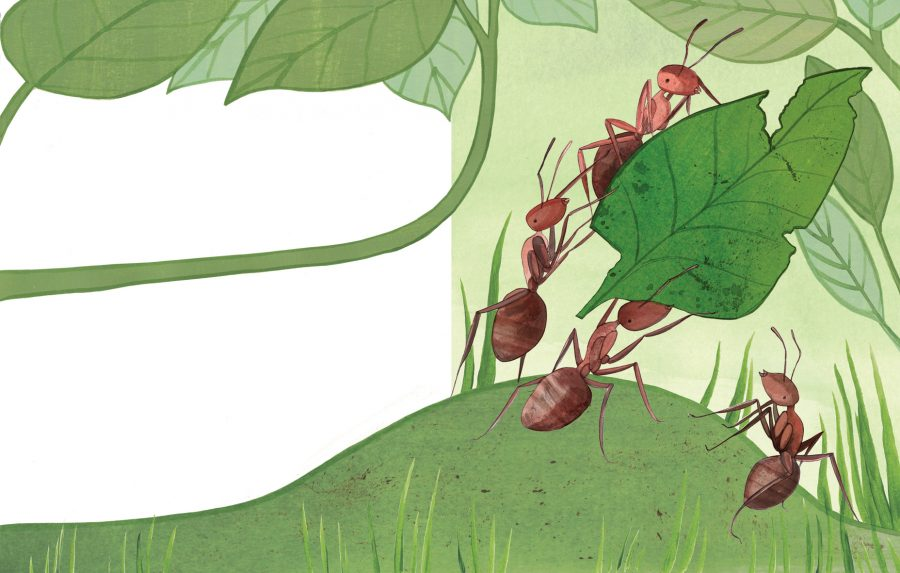 Leaf Ants for You Can Draw Animals by Parragon Books