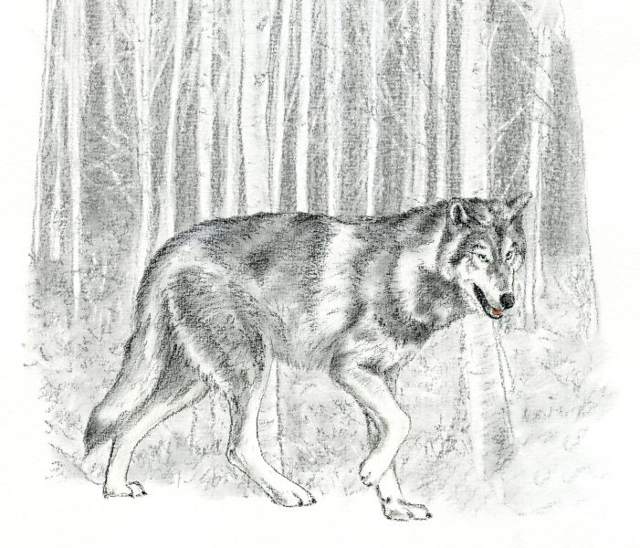 little red riding hood - wolf