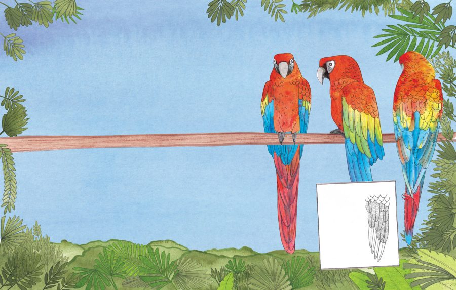 Macaws for You Can Draw Animals by Parragon Books