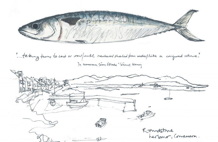 Mackerel fishing harbour