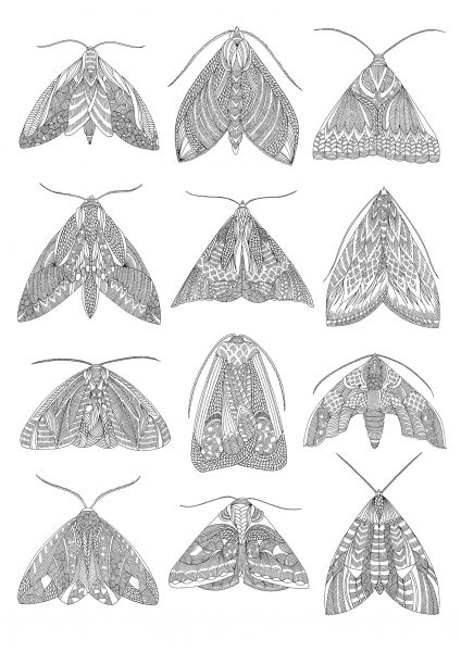 Moth Wallchart