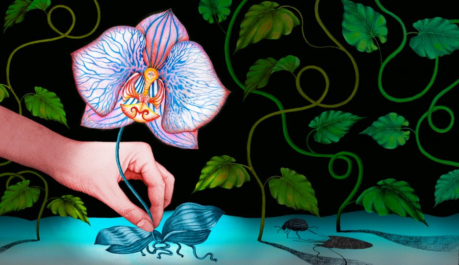Putting endangered plants in the spotlight