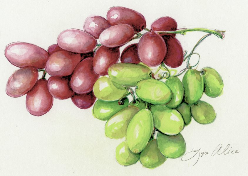 Red & Green Grapes ~ Watercolor