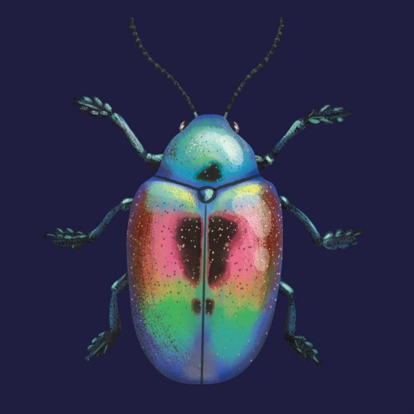 Shining Beetle