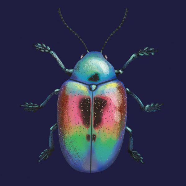 Shining Beetle