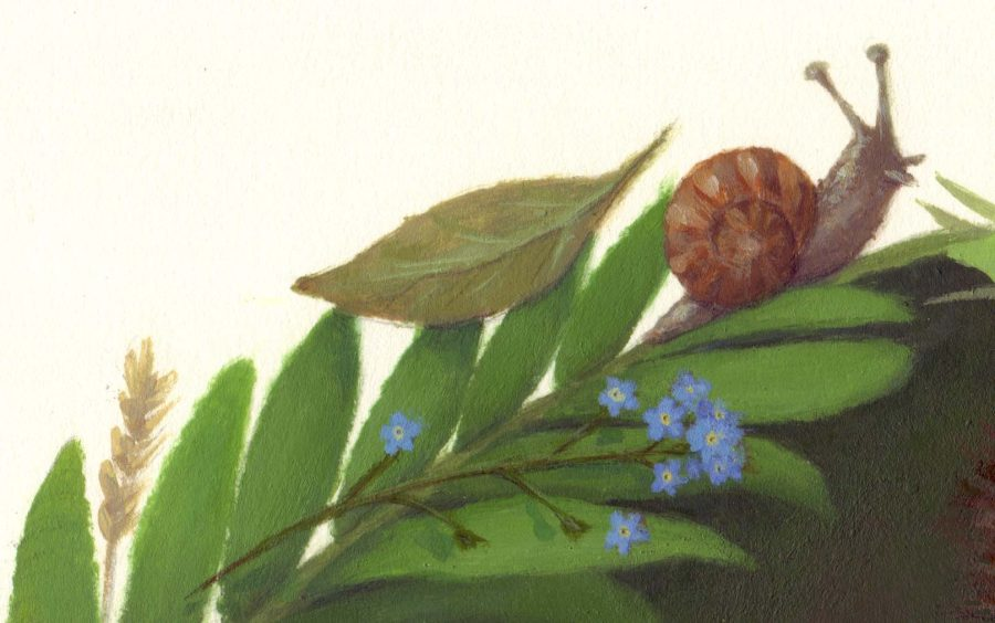 Snail and Forget-me-not