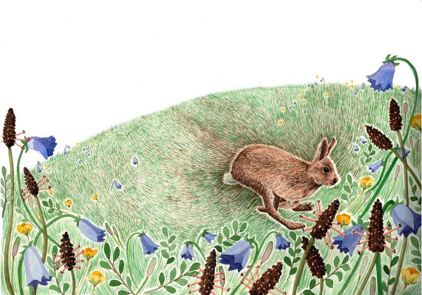The hare's corner