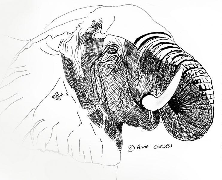 The Matriarch (Elephant)