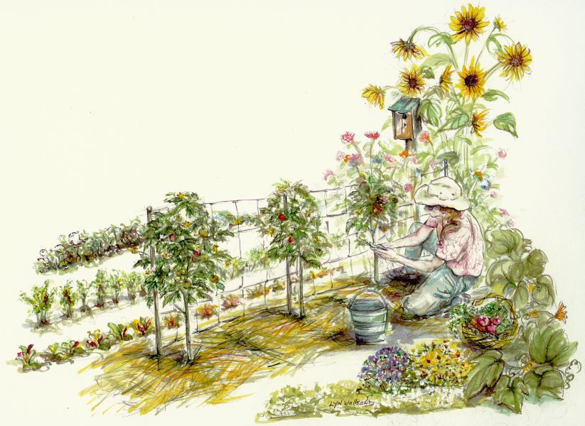 Tomato Trimming ~ Lead Illustration for �Mother Earth News� ~Dyes & Ink