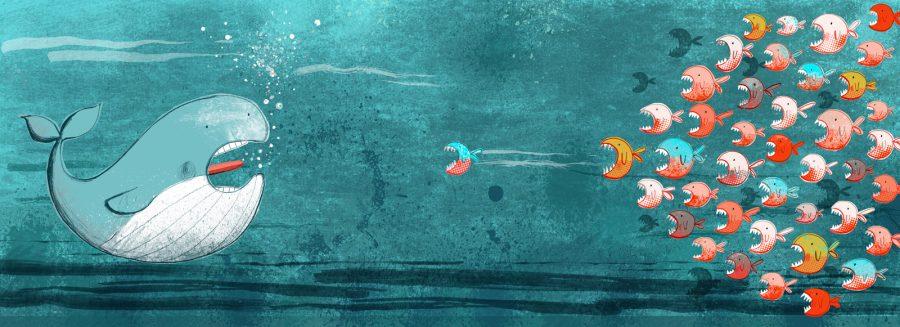 Whale and Piranhas