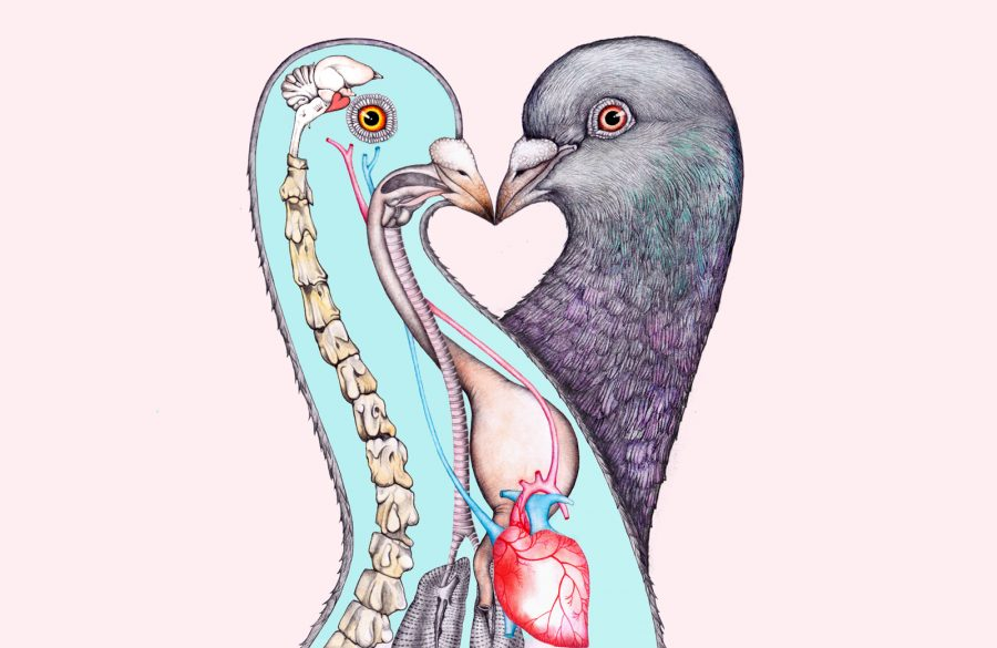 What Pigeons Teach Us About Love