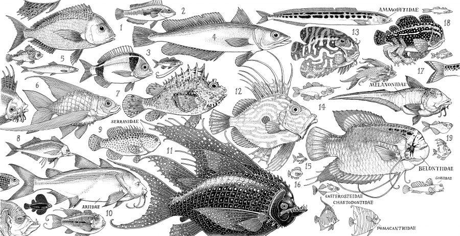 Zooligist Fish