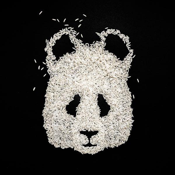 Ricebear