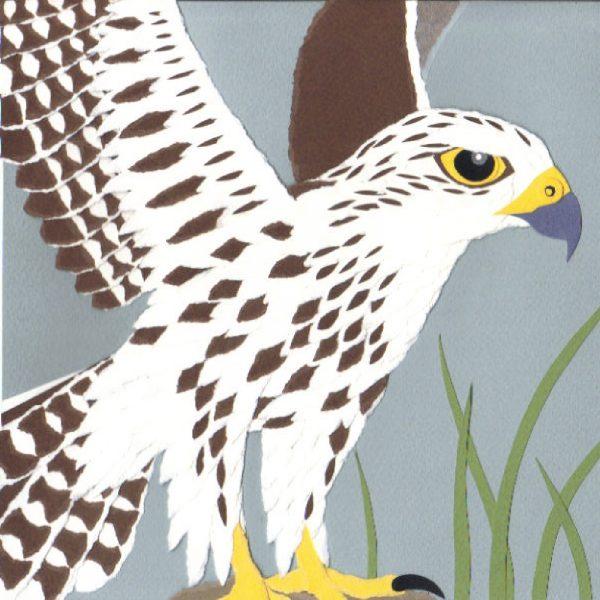 Saker Falcon